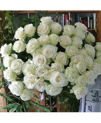 Белые розы (51шт)